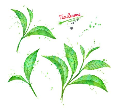 Watercolor illustration collection of tea leaves