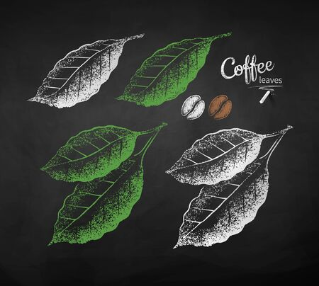 Vector chalk drawn sketches of coffee leaves