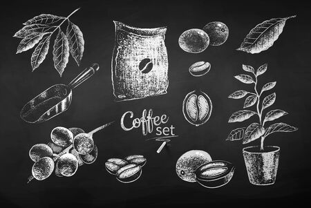 Illustrations of coffee beans and berries