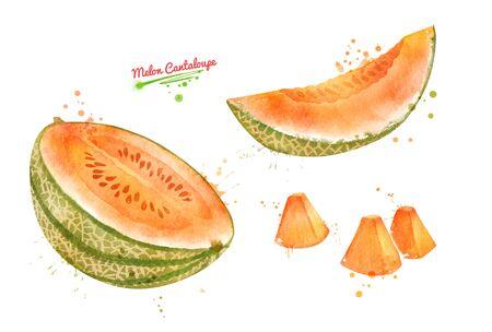 Illustration of sliced Melon Cantaloupe Banque d'images - 134863415