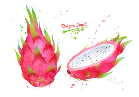 Watercolor illustration of Dragon fruit