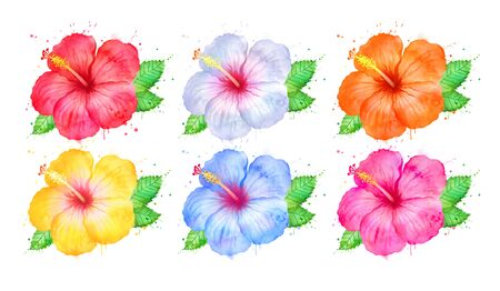 Watercolor illustration of Hibiscus flowers