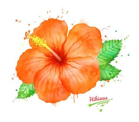 Watercolor illustration of Hibiscus flower Zdjęcie Seryjne