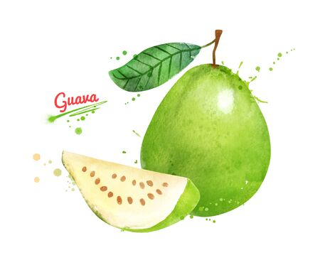 Watercolor illustration of Guava fruit
