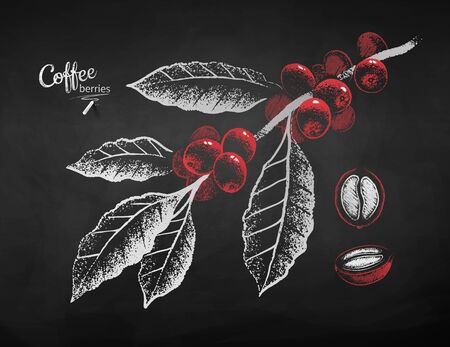 Chalk drawn coffee branch and berry
