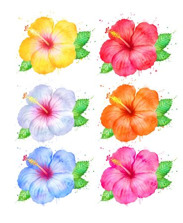 Set of color variations of Hibiscus flowers Stock Photo
