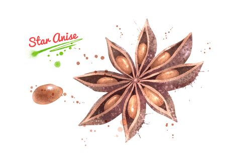 Illustration of Star Anise and seed