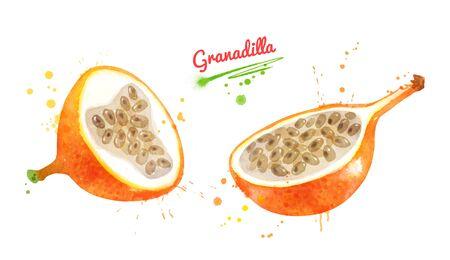 Illustrations of half of Granadilla fruit Banco de Imagens
