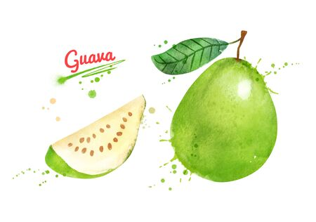 Illustration of whole and half of Guava fruit