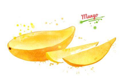 Watercolor illustration of yellow mango