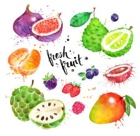 Watercolor set of exotic fruit and berries Imagens