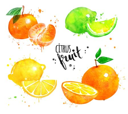 Watercolor set of citrus fruit Stock Photo