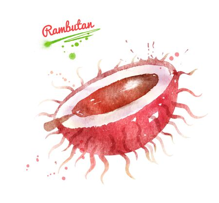 Illustration of half of Rambutan fruit