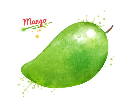 Watercolor illustration of whole green Mango fruit.