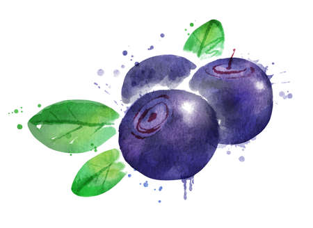 Watercolor vector illustration of bilberry