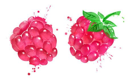 Watercolor vector illustration of raspberry