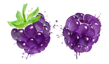 Watercolor vector illustration of blackberry Vettoriali