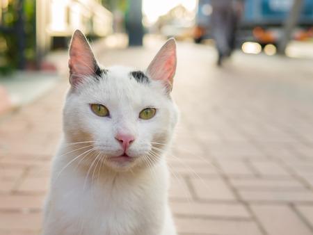 カメラの近くに来る緑の目の通り白猫 写真素材