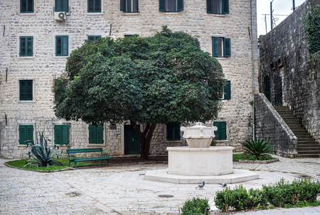 old town square: Tree in the central old town square of Kotor, Montenegro