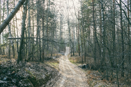 late fall: Country road crossing the forest, late Fall, Central Russia Stock Photo