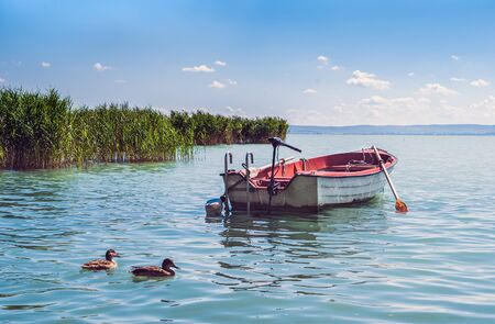 clear day: A boat and wild ducks floatinf in the rushy bay of lake Balaton in Hungary on a sunny clear day