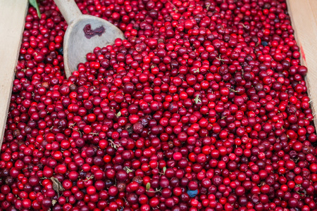 mountain cranberry: Fresh forest lingenberries at the market stall in Vienna Stock Photo
