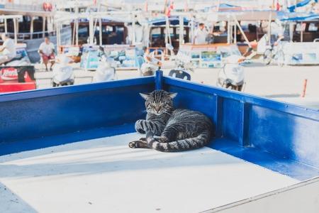 pezones: Gato perezoso relaja en un puesto del mercado de la ciudad mediterránea de Kas, Antalya, Turquía Foto de archivo