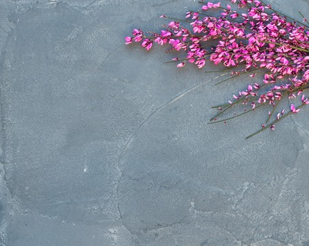 Purple spring blooming tree branch on a grey concrete stone background, top view, copy space