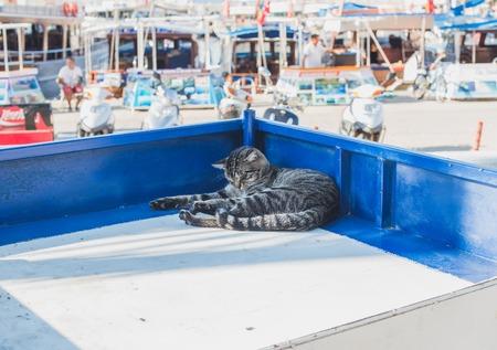 pezones: Gato perezoso relaja en un puesto del mercado de la ciudad mediterr�nea de Kas, Antalya, Turqu�a Foto de archivo