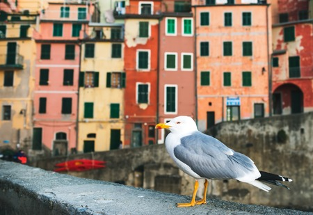 sea gull: Sea Gull sitting on stone fence in Harbor of Riomaggiore with its traditional colorful buildings, Cinque Terre, Italy