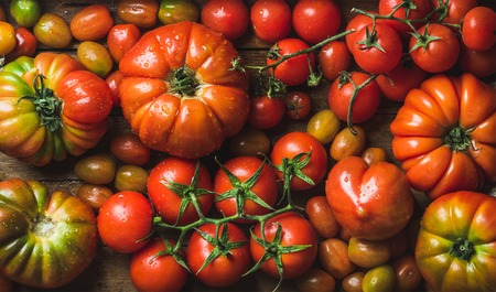 hotbed: Colorful tomatoes of different sizes and kinds, top view, horizontal composition