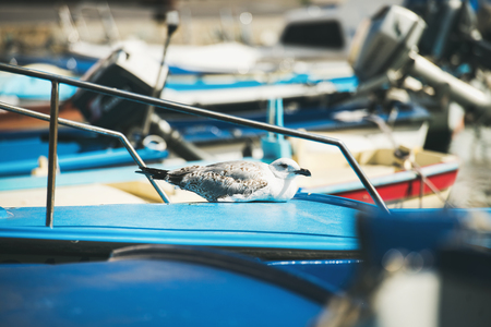Seagull sitting on blue boat sundeck in Piran marina in the seaside of Slovenia, Adriatic coast Stock Photo