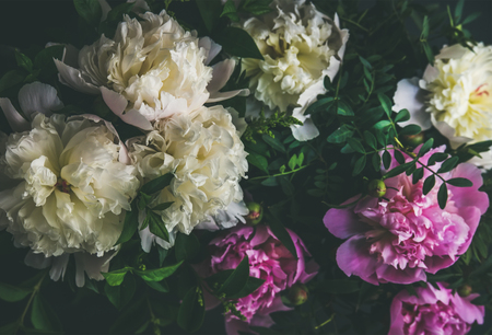 Natural floral pattern, texture and background. White and pink peony flowers over dark background, top view, selective focus. Summer, Valentines or Woman s day greeting card