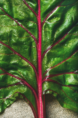 Close-up of fresh swiss chard green leaf over grey concrete stone background, top view, vertical composition. Clean eating, vegetarian, vegan, alcaline diet, organic, healthy cooking concept Stock Photo