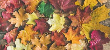 秋の背景、テクスチャ、およびパターン。カラフルな黄色と赤のフラット レイアウト木製の背景、平面図、広い構成を落とされたカエデの葉します