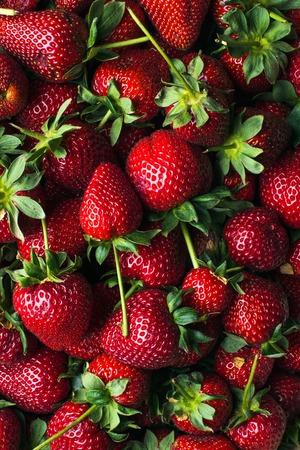 갓 수확 된 익은 딸기, 상위 뷰입니다. 바탕 화면, 질감 및 배경