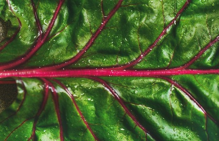 Close-up of fresh swiss chard green leaf over grey concrete stone background, top view, horizontal composition. Clean eating, vegetarian, vegan, alcaline diet, organic, healthy cooking concept