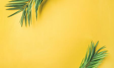 Flat-lay of green palm branches over yellow background, top view, copy space, wide composition. Summer vacation, travel or fashion concept 스톡 콘텐츠