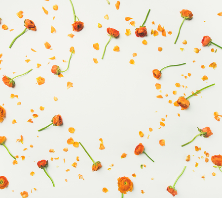 Floral texture, pattern or wallpaper. Flat-lay of orange ranunculus flowers over white background, top view, copy space. Greeting card or wedding invitation concept