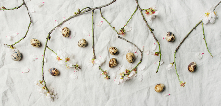 Easter holiday background. Flat-lay of tender Spring almond blossom flowers on branches and quail eggs over light grey linen cloth, top view. Greeting card concept Stock Photo