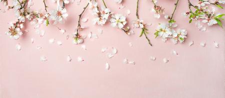 Frühlingsblumenhintergrund, Beschaffenheit, Tapete. Flachlage von weißen Mandelblütenblumen und -blumenblättern über rosa Hintergrund, Draufsicht, Kopienraum, breite Zusammensetzung. Womens Day Urlaub Grußkarte
