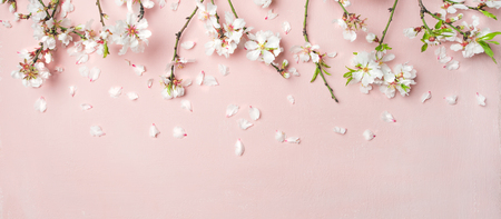 Spring floral background, texture, wallpaper. Flat-lay of white almond blossom flowers and petals over pink background, top view, copy space, wide composition. Womens day holiday greeting card Stockfoto