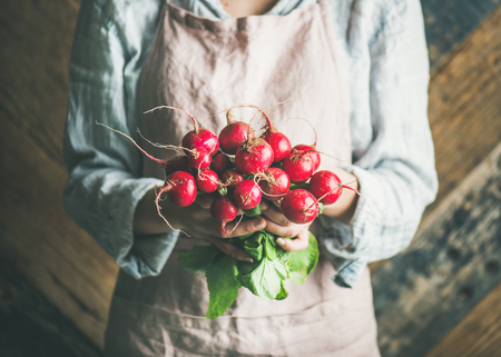 Female farmer wearing pastel linen apron and shirt holding bunch of fresh ripe radish with leaves in her hands, rustic wooden barn wall at background. Organic produce or local market concept Stock Photo