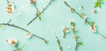 Spring floral background, texture and wallpaper. Flat-lay of white almond blossom flowers over light blue pastel background, top view, wide composition. Womens day holiday greeting card concept