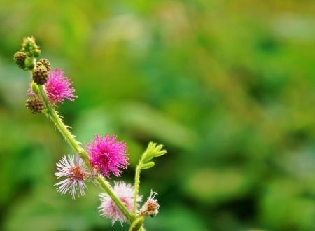 powszechnie: kwiat powszechnie postrzegane