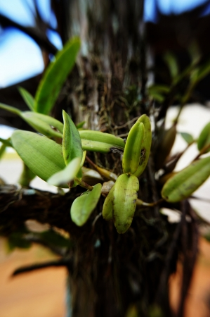 holgaz�n: plantas ociosas