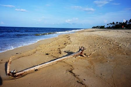 arboles secos: entre la playa y los �rboles muertos
