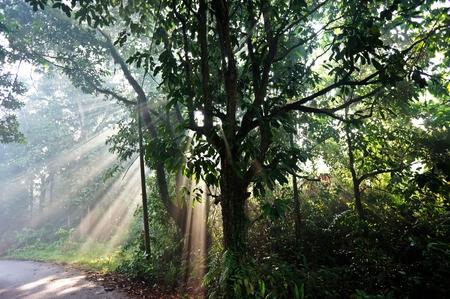 interstitial: light morning Stock Photo
