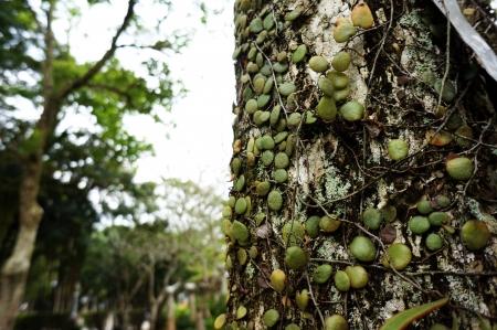 surrogate: Surrogate tree