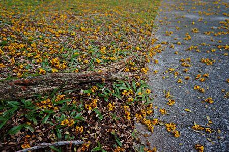 flores peque�as: amarillas peque�as flores en carretera Foto de archivo